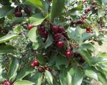 Шанса за газдинства у Топлици: Расписани подстицаји за многе гране пољопривреде