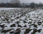 Stranci će moći da kupuju poljoprivredno zemljište u Srbiji