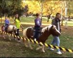 Druženje sa životinjama u Parku Svetog Save u Nišu
