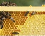 Vranje domaćin Prvog pčelarskog sajma jugoistočnog Balkana