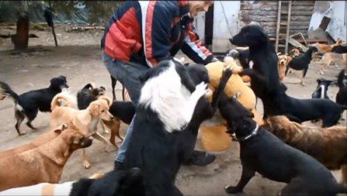 У Нишу се налази прави рај за псе луталице, Фото: printscreen Youtube