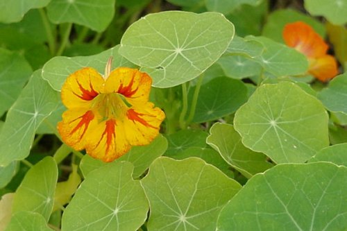 Biljke u junu za vašu baštu i terase