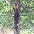 Bogorodica na stablu drveta