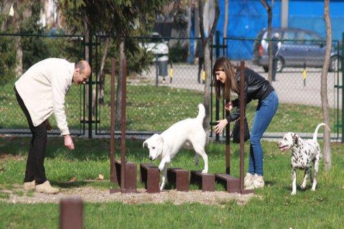 Отворено шеталиште за псе