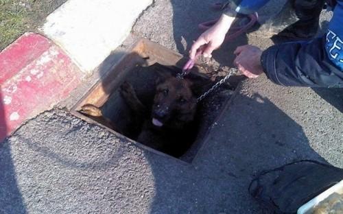 Нови случај бруталног злостављања животиња: Ланцима и жицом везао пса у шахт