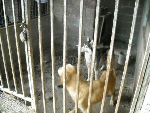 Угинули пси били два месеца без хране и воде