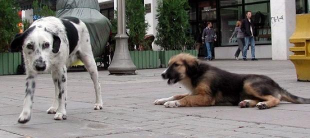 Проблем напуштених паса на нишким улицама Фото Танјуг