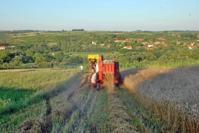 Завршена жетва у прокупачкој општини