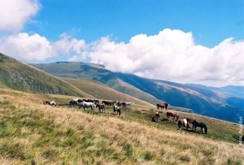 Suva planina zaštićeno područje I kategorije