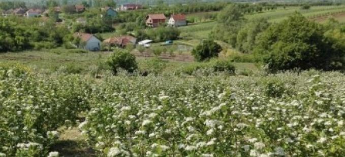 Кућа на селу: Информације у вези конкурса у Градској управи у Прокупљу