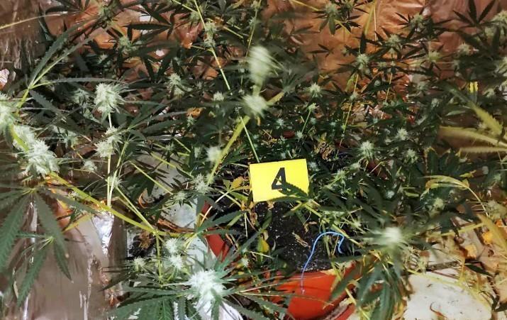 U stanu Leskovčanina pronađena laboratorija za uzgoj marihuane