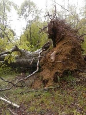 Tornado kod Leskovca! Nosio krovove, čupao drveće