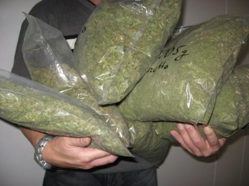 Откривена лабораторија за производњу марихуане