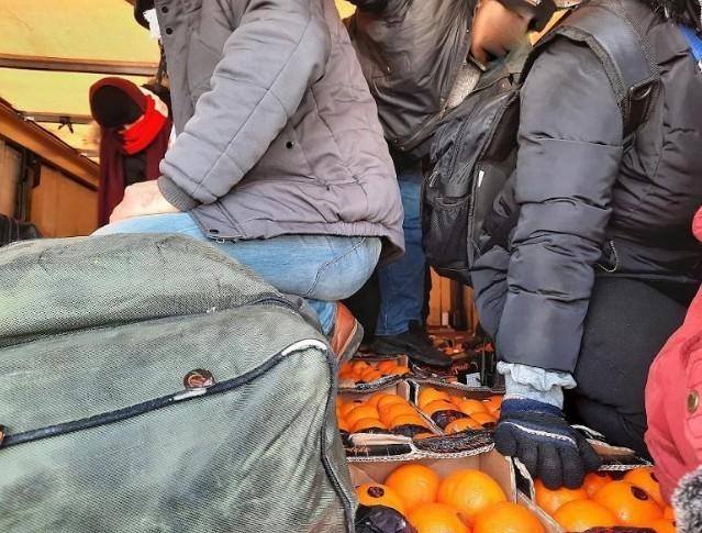 """Међу мандаринама и поморанџама 12 """"слепих путника"""" из Сирије"""