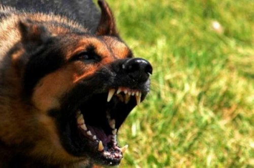 Агресивни и гладни пси тероришу Прокупчане