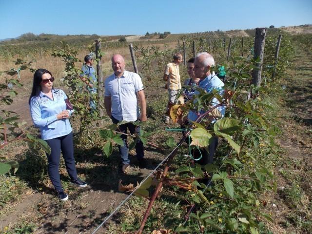 Navodnjavanjem do većih prinosa u vinogradarstvu