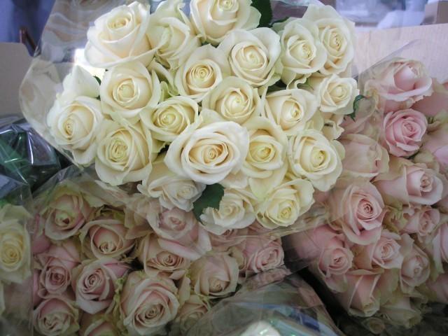 Шверц ружа, хризантема и љиљана из Грачке преко Бугарске у Србију