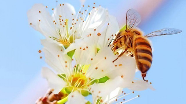 Забрана прскања хемијским средствима цветове биљака у куршумлијском крају