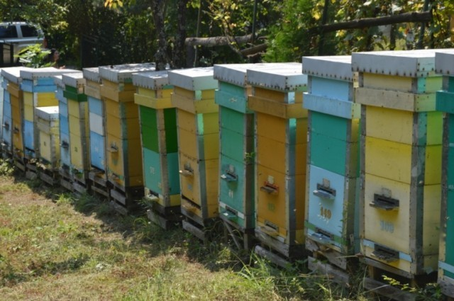 Пчелињак породице Станић који даје и до 10 тона меда годишње