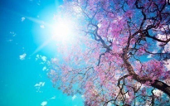 Да не заборавимо нешто лепо: Јуче почело пролеће