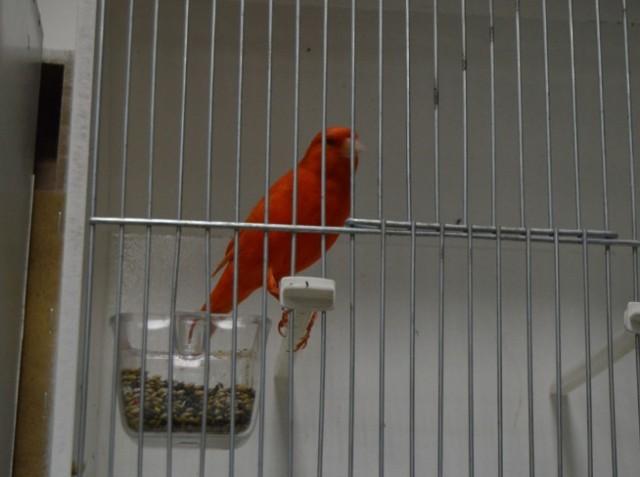 Прва међународна изложба птица у Лесковцу