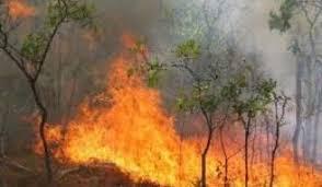 Požar zahvatio šumu kod Vlasotinca
