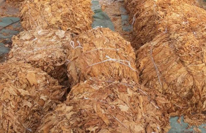 У стану Алексинчанина пронађена скоро једна тона резаног дувана