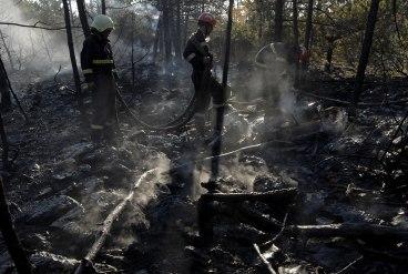 Izgorelo 100 hektara šume