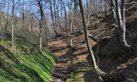 Пошумљавање и нови шумски путеви на територији Прокупља