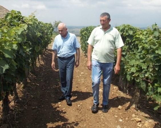 """Očekuje se dobar rod u """"Topličkim vinogradima"""""""
