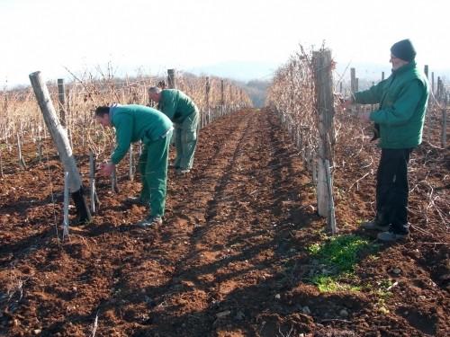 Vinogradari obeležavaju svoju slavu