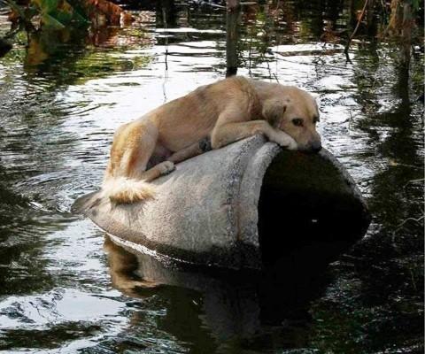 Животиње спасене из поплава стигле у Ниш